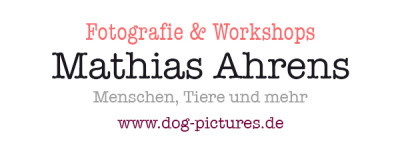 www.dog-pictures.de - Tierfotografie und Workshops