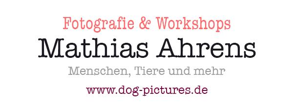 www.dog-pictures.de - Tierfotografie und Workshops